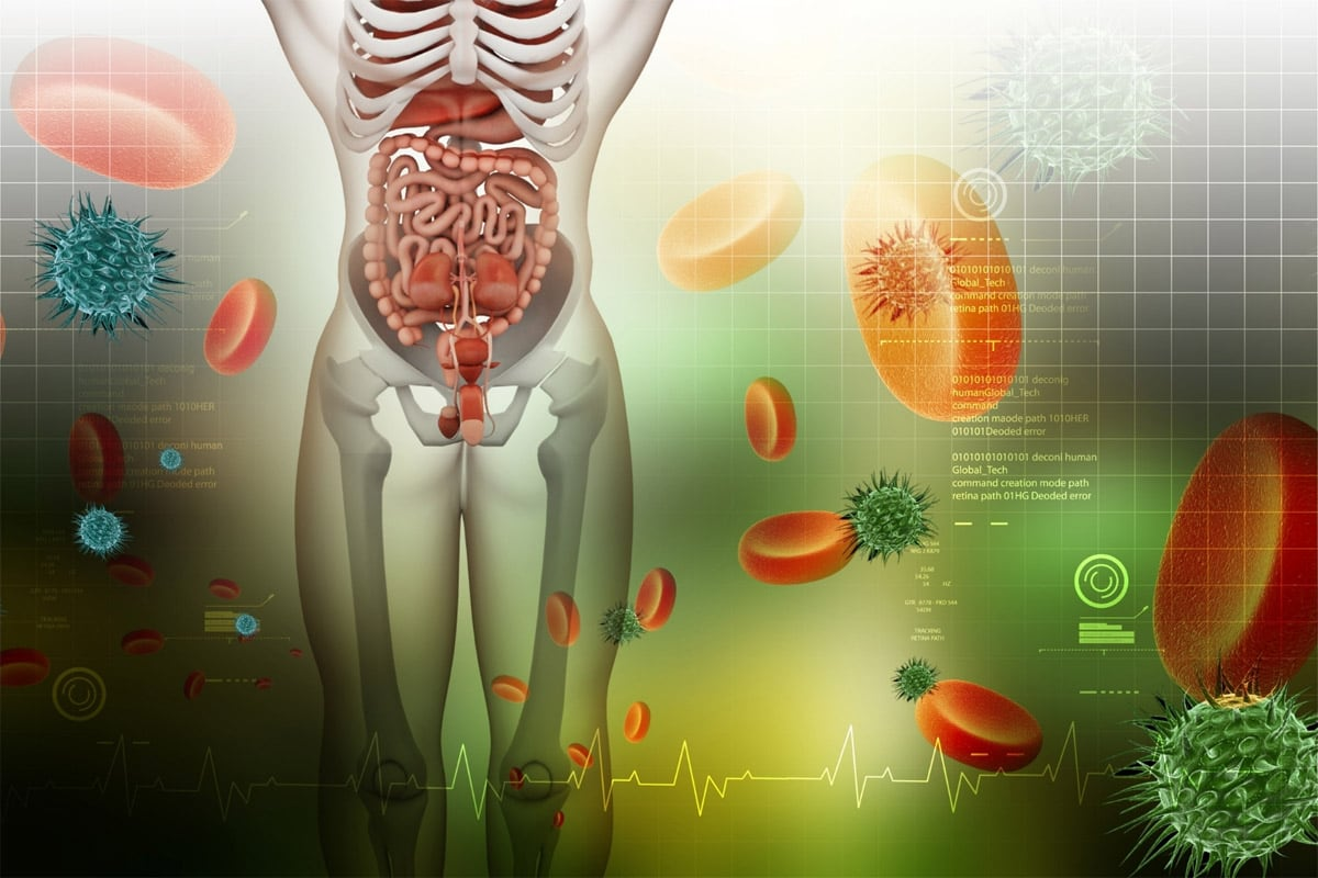 intervallfasten weg der nahrung - Der Weg der Nahrung durch unseren Körper